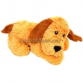 Cute Teddy Dog