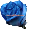 Single Blue Rose Bouquet